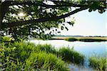 Prerowstrom in Morning, Prerow, Fischland-Darss-Zingst, Mecklenburg-Western Pomerania, Germany