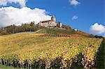 Burg Lichtenberg Castle and vineyards in autumn, Oberstenfeld, Ludwigsburg District, Baden Wurttemberg, Germany, Europe