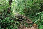 Rainforest, Cameron Highlands, Pahang, Malaysia