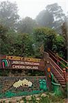 Mossy Forest, Gunung Brinchang, Cameron Highlands, Pahang, Malaysia