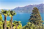 Chinese hemp palm trees (Trachycarpus fortunei) overlooking the Lago Maggiore, spring, Switzerland