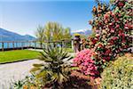 Blooming Azalea in a park above the lake, spring, Minusio, Lake Maggiore, Switzerland