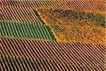 Aerial View of Vineyard in Autumn, Centgrafenberg, Burgstadt, Untermain, Spessart, Franconia, Bavaria, Germany