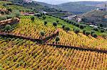 Vineyards in Vilarinho dos Freires, Santa Marta de Penaguiao. Alto Douro, a Unesco World Heritage Site. Portugal