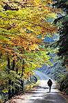Beech trees in autumn time. Serra da Estrela Nature Park, Portugal (MR)