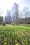 Field of daffodils and Deutsche bank building, Frankfurt, Hesse, Germany