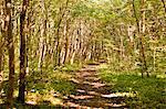 Walkway through forest