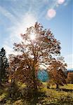 Sun shining through tree in field