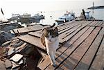 Cat walking on pier