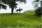 Horse rider riding through field landscape