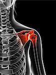 Human shoulder joint, computer artwork.