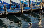 Close up of a row of gondolas on canal, Venice, Veneto, Italy
