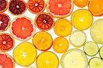 Slices of citrus fruit, studio shot.