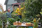 Mature couple picking apples, Stockholm, Sweden