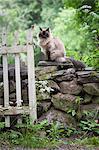 Cat sitting on stone wall