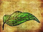 Grunge hand drawn leaf of green color on paper background.