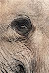 African elephant eye (Loxodonta africana), Addo Elephant National Park, South Africa, Africa