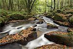 River Fowey tumbling through rocks at Golitha Falls in autumn, Cornwall, England, United Kingdom, Europe