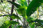 Plants in rainforest