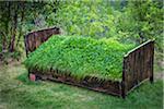 Grass growing on old bed, Hardanger Folk Museum, Utne, Hordaland, Norway