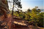 Sandstone Rock in Forest with Sun, Hochstein, Dahn, Dahner Felsenland, Pfalzerwald, Rhineland-Palatinate, Germany