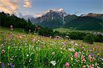 Meadow with wildflowers, Mazeri village, Svaneti, Georgia