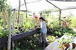 Woman gardening in greenhouse