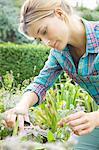Woman Cutting Flowers in Garden