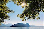 Sun breaking through Chestnut leaves hanging down at Lake Lucerne, Vitznau, Lucerne District, Canton of Lucerne, Switzerland