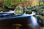 Autumn colours at the wild river La Hoegne, near the High Fens (Hautes Fagnes), Ardennes Forest, Walloon Region, Belgium