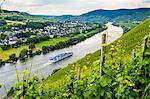 Cruise ship passing a vineyard at Muehlheim, Moselle Valley, Rhineland-Palatinate, Germany, Europe