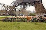 Deer standing near flowers under the Eiffel Tower