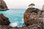 Lone pine tree on a rock in the Bay, Cala Sa Calobra, Majorica, Balearic Islands, Spain