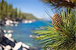 Beautiful Pine Cone on Tree Branch Near Mountain Lake Shore.