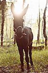 Portrait of mule in sunlit woods, Premosello, Verbania, Piemonte, Italy