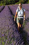 Hiking woman, Aubenas, lavender field, Ardàche, Rhones-Alpes, France MR