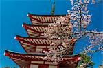 Chureito pagoda with blooming cherry tree, Fujiyoshida, Yamanashi Prefecture, Japan