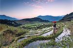 Vietnam, Sapa. Red Dao woman on rice paddies at sunrise (MR)