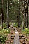 Pathway through forest, Helsinki, Finland