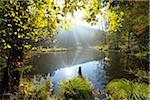 Pond with Sun in Autumn, Neudahner Weiher, Moosbach, Dahn, Dahner Felsenland, Pfalzerwald, Rhineland-Palatinate, Germany