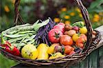 A large harvesting basket in a vegetable garden