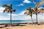 Palm Trees by Beach and Promenade, Puerto del Carmen, Lanzarote, Canary Islands, Spain