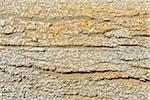 Driftwood Detail, Saintes-Maries-de-la-Mer, Camargue, Bouches-du-Rhone, Provence-Alpes-Cote d'Azur, France