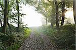Forest Path with Morning Mist and Sun Rays, Holzfeld, Boppard, Rhein-Hunsruck-Kreis, Rhineland-Palatinate, Germany