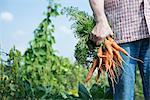 Bio vegetables man holding carrots garden