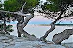 Anse de Sainte Croix with Pine Trees at Dawn, La Couronne, Martigues, Cote Bleue, Mediterranean Sea, Bouches-du-Rhone, Provence-Alpes-Cote d'Azur, France
