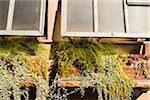 Close-up of Window Planters, Brooklyn, New York City, New York, USA