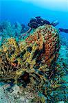 Diver views array of sponges.