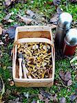 Mushroom in basket