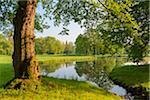 Tree Trunk by Lake in Spring, Park Schonbusch, Aschaffenburg, Lower Franconia, Bavaria, Germany